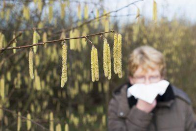 Hasel Pollen