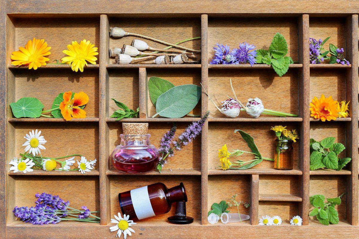 Propolis wird von Bienen produziert und ihm werden bestimmte gesundheitsfördernde Eigenschaften zugeschrieben